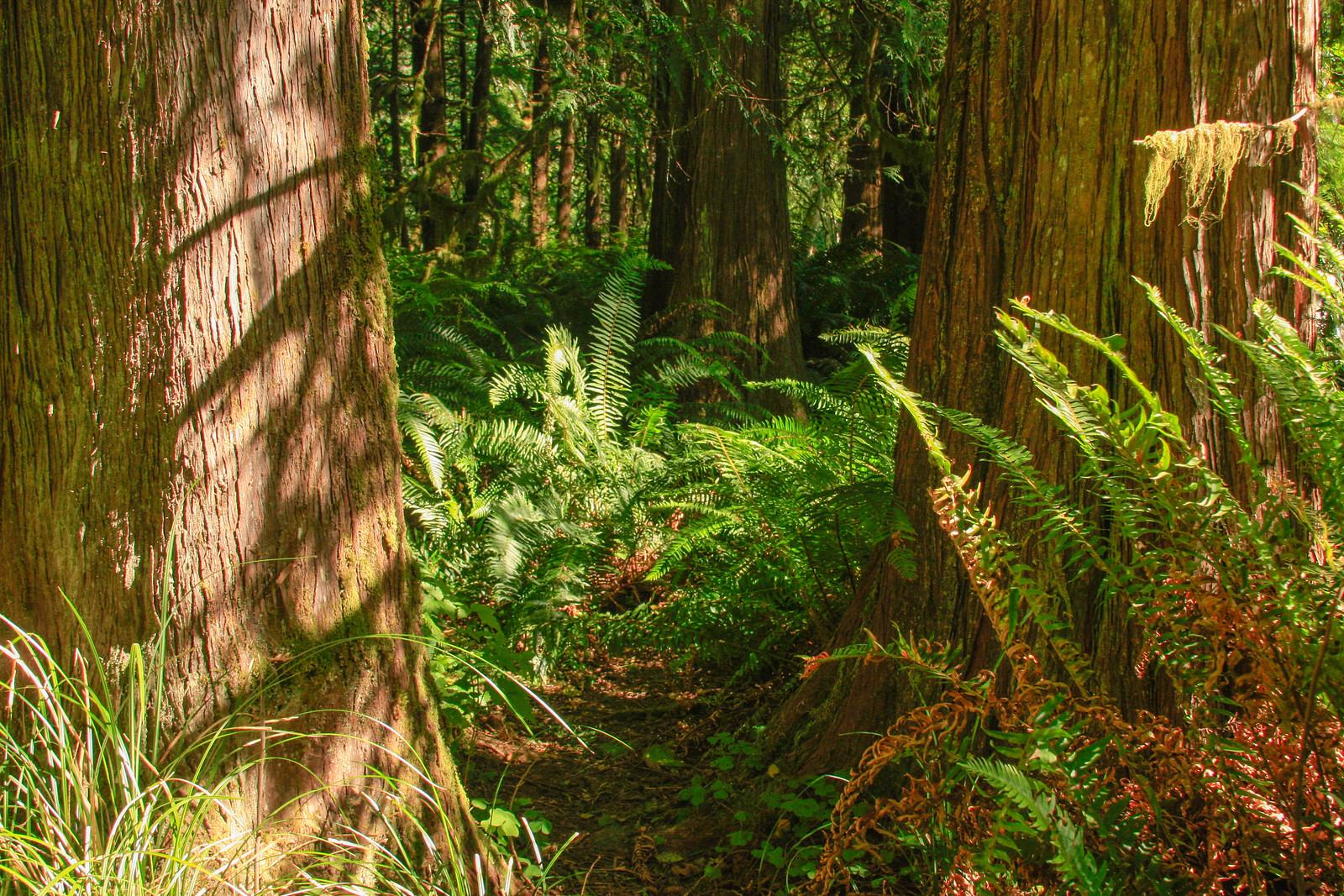 Western Washington Forest